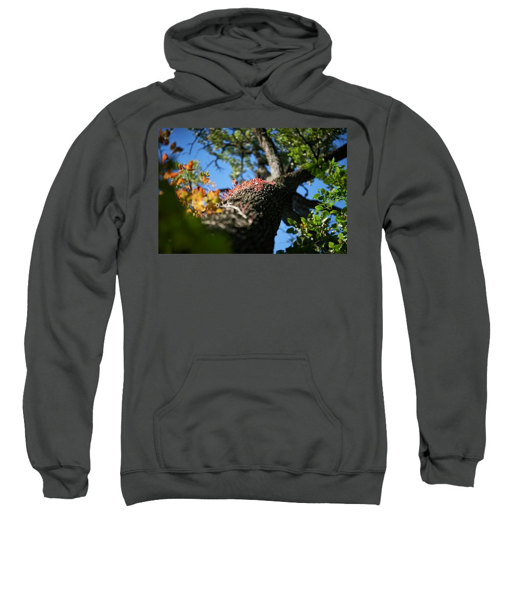Trees Sweatshirt featuring the photograph Colors On The Side. by Brian Bartz