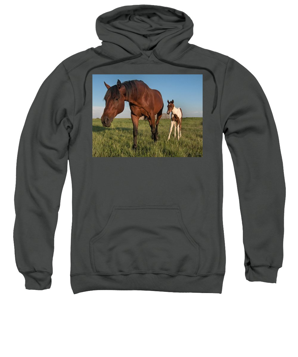 Horse Colt Baby Animals Herd Filly Ranch Farm Life Pasture Sweatshirt featuring the photograph Contentment by Andrea Lawrence