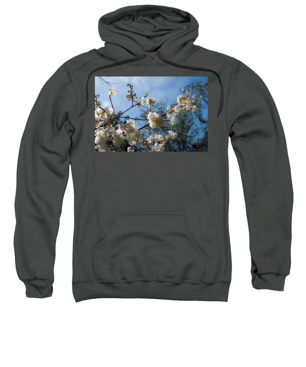 Cool Cherry Blossoms Sweatshirt featuring the photograph Cool Cherry Blossoms by Bonnie Follett