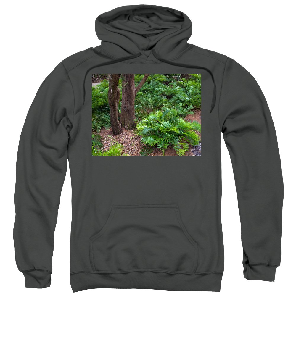 Florida; Coontie; Zamia; Integrifolia; Arrowroot; Indian; Bread; Breadroot; Plant; Rare; Wild; Prote Sweatshirt featuring the photograph Coontie Florida Arrowroot Or Indian Breadroot by Allan Hughes