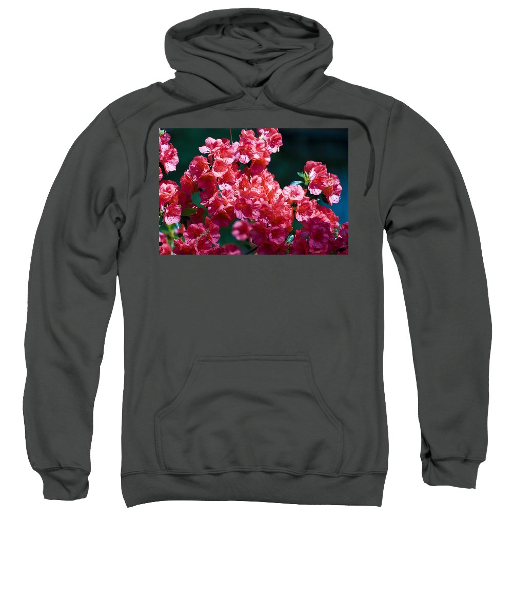 Azalea Sweatshirt featuring the photograph Coral Azaleas by Teresa Mucha