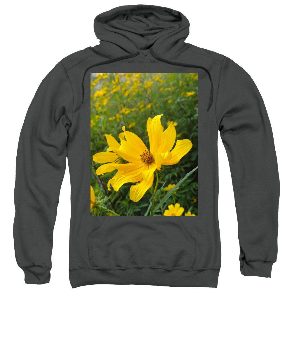 Coreopsis Sweatshirt featuring the photograph Coreopsis by Trish Hale
