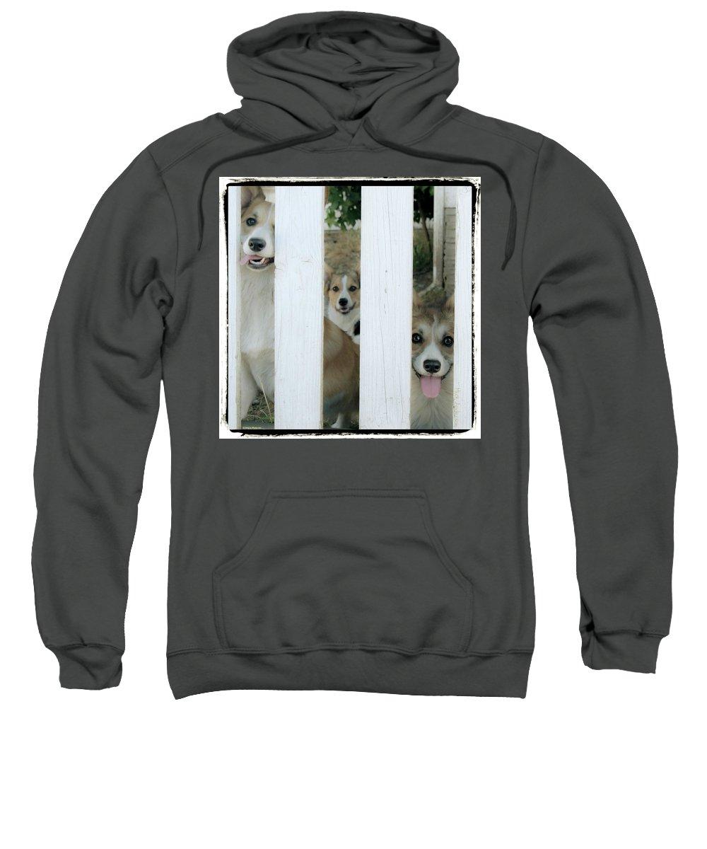 Corgi Sweatshirt featuring the photograph Corgis Three by Mick Anderson