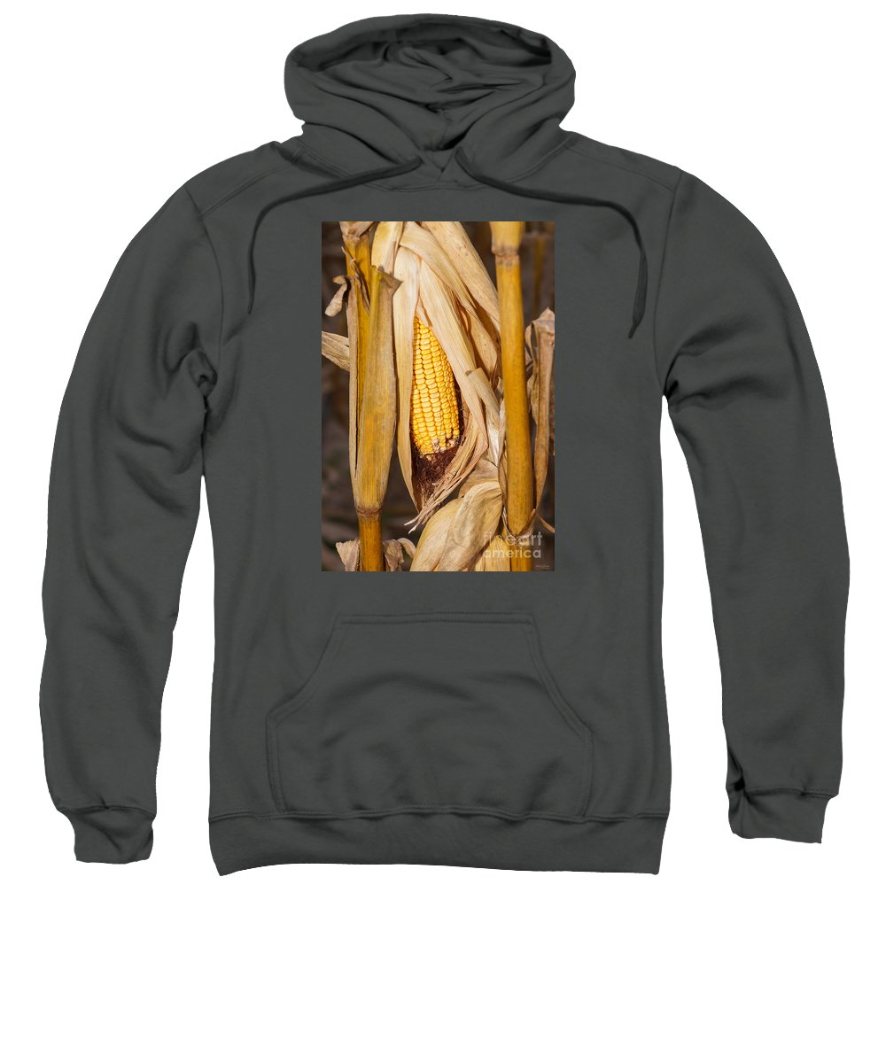 America Sweatshirt featuring the photograph Corn Cobb On Stalk by Jennifer White