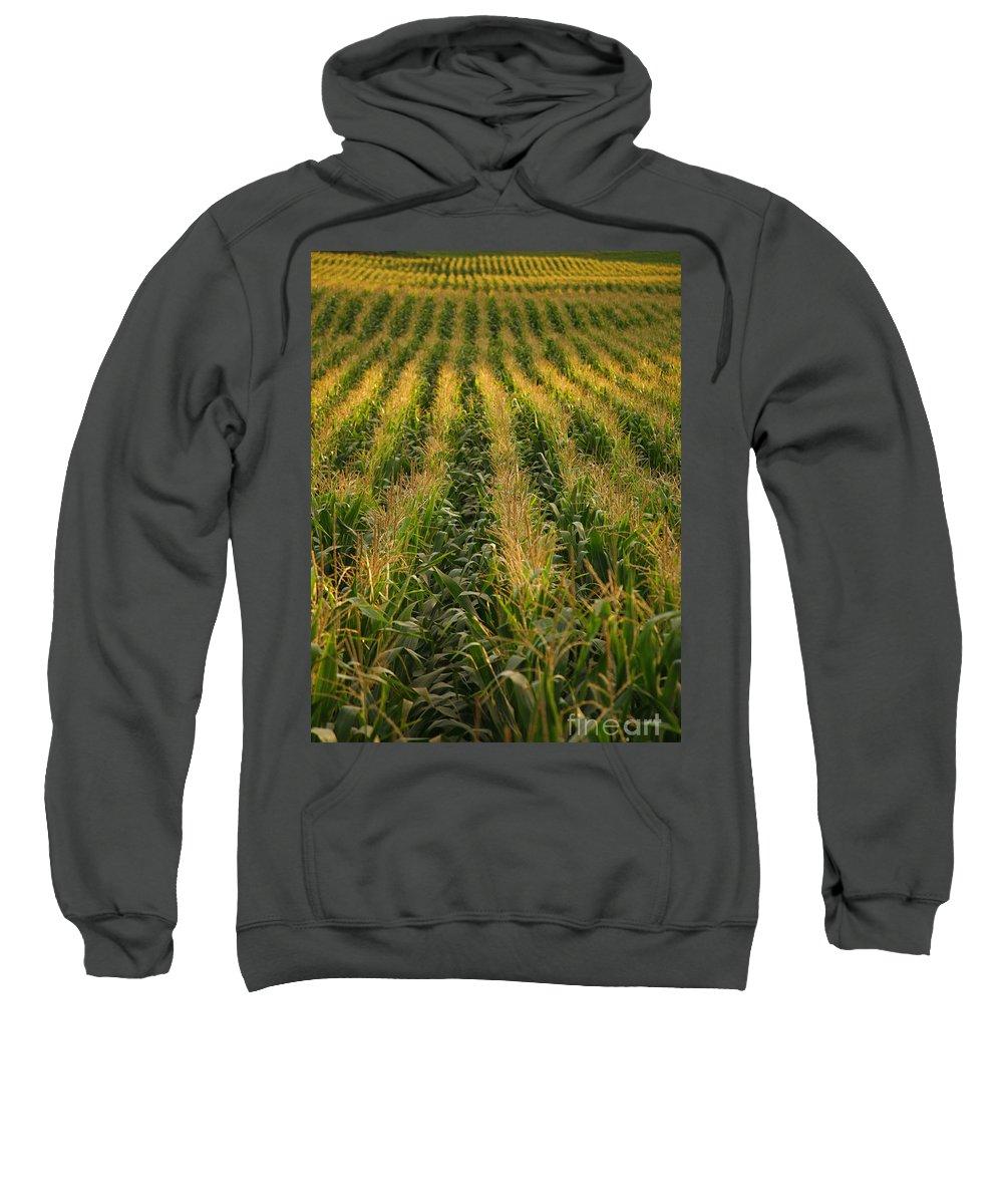 Acores Sweatshirt featuring the photograph Corn Field by Gaspar Avila