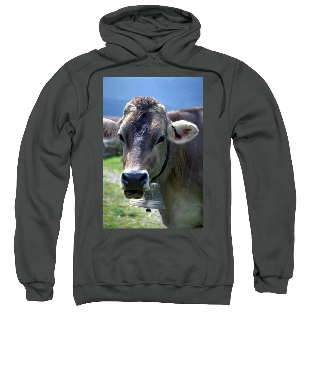 Cow Sweatshirt featuring the photograph Cow by Flavia Westerwelle