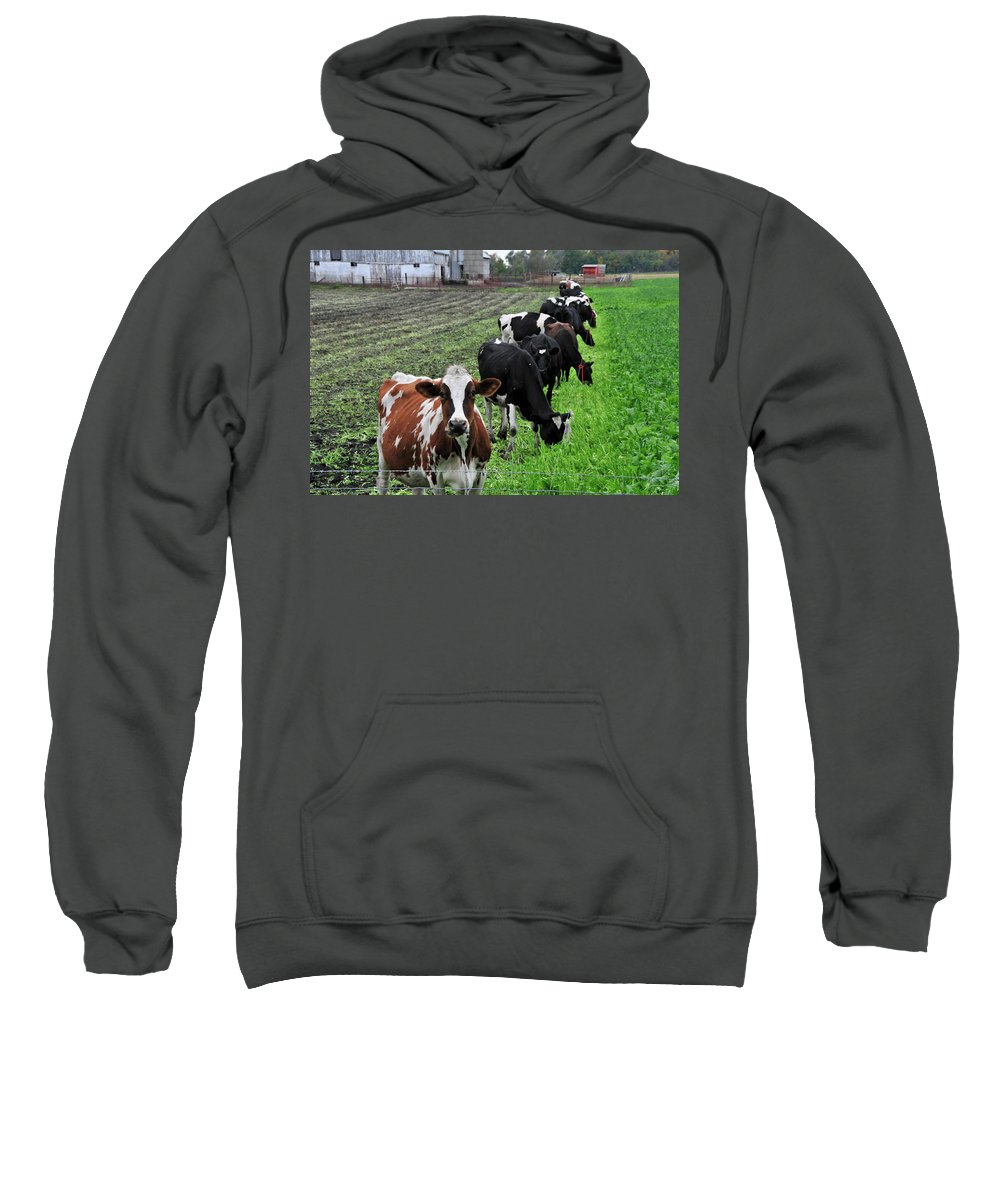 Cows Sweatshirt featuring the photograph Cow Line Up by David Arment