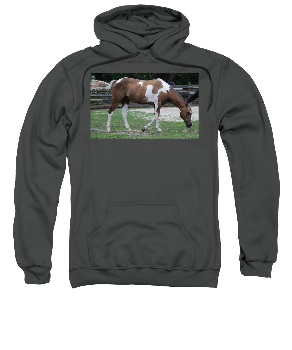 Horse Sweatshirt featuring the photograph Cow Spotted Horse by Rob Hans