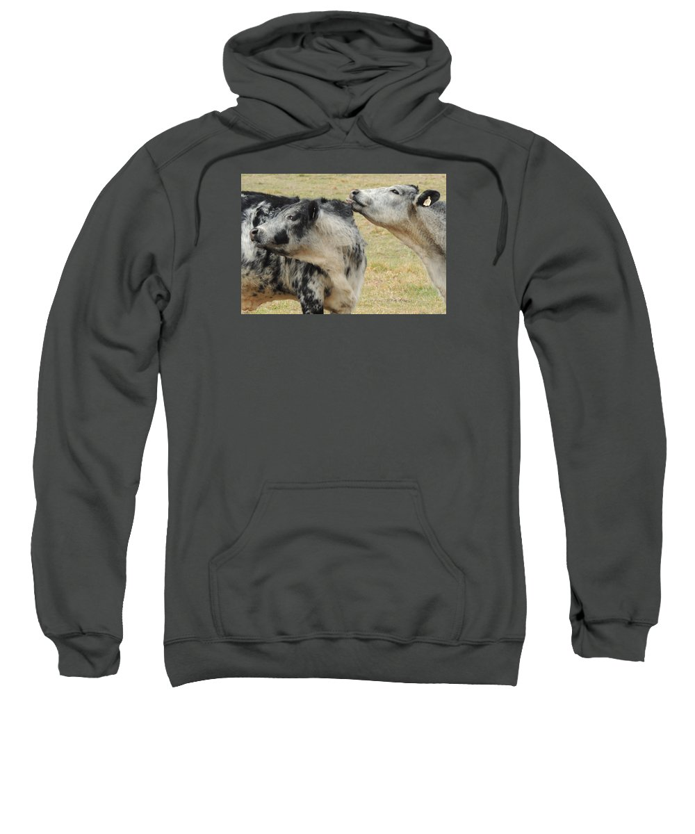 Cows Sweatshirt featuring the photograph Cowlick by Delana Epperson
