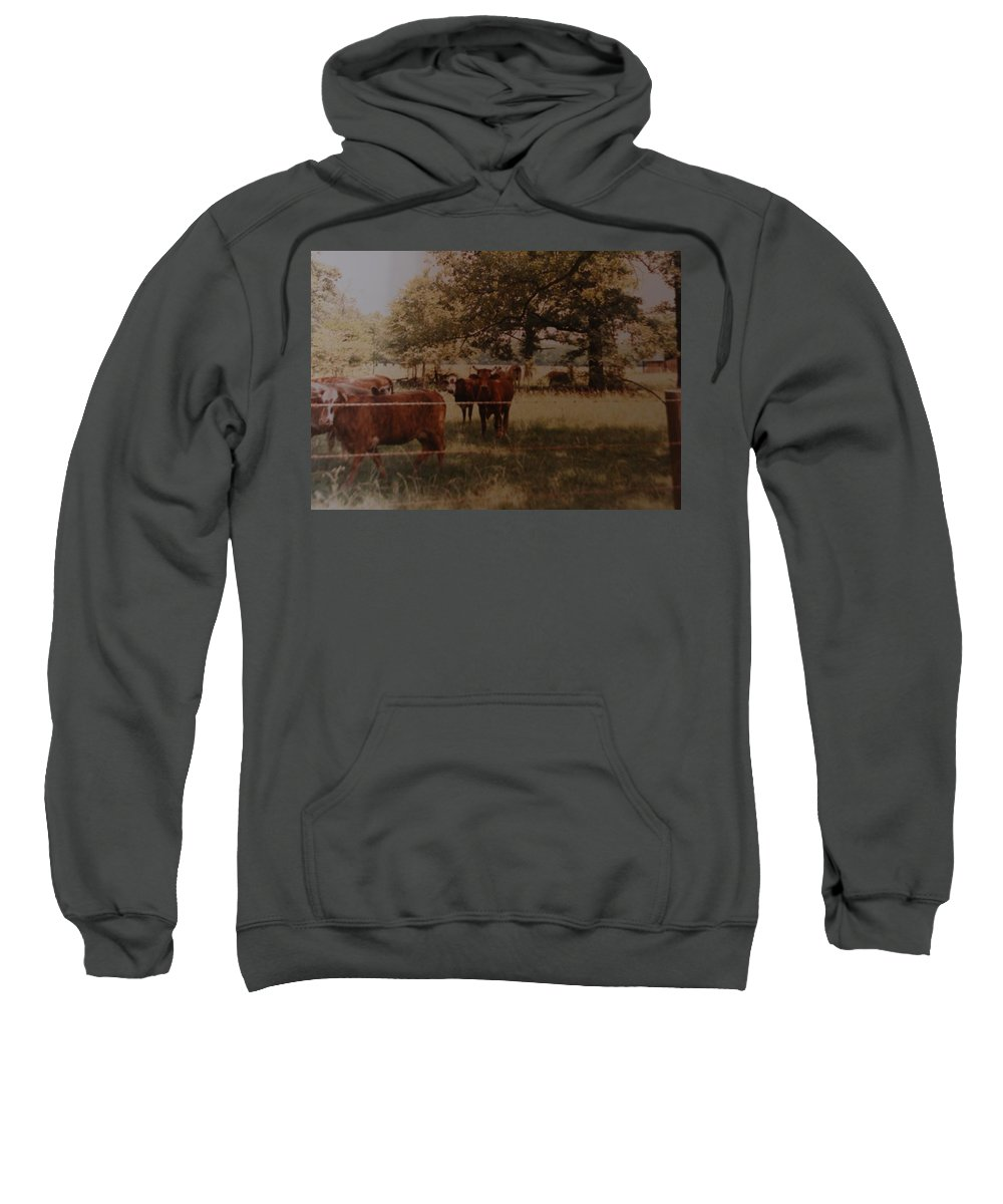 Cows Sweatshirt featuring the photograph Cows by Rob Hans