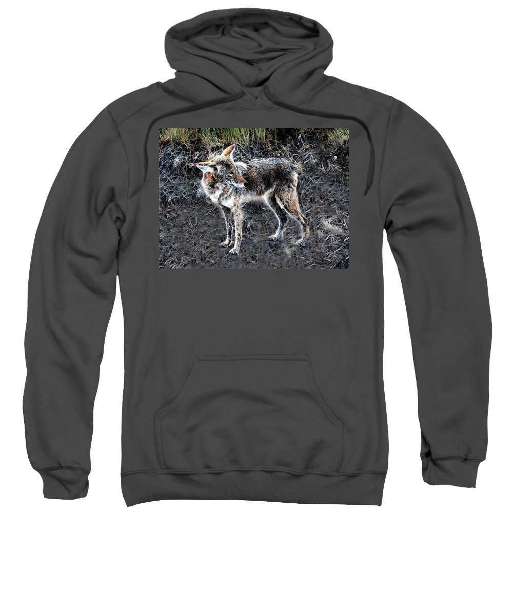 Coyote Sweatshirt featuring the painting Coyote Waits by David Lee Thompson