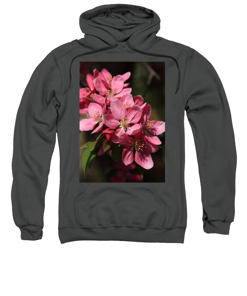 Tree Sweatshirt featuring the photograph Crab Apple Blossoms by Lyle Hatch