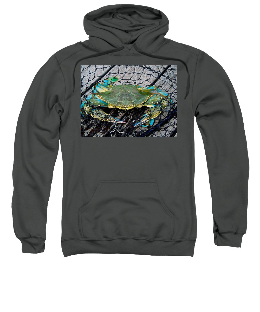 Animals Sweatshirt featuring the photograph Crabby About This by Dale Chapel