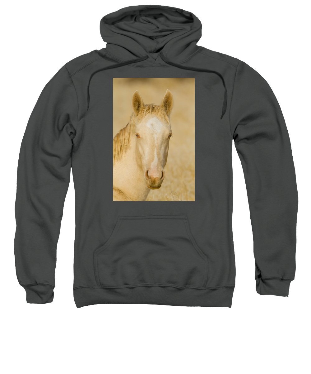 Wild Horse Sweatshirt featuring the photograph Handsome Boy by Kent Keller