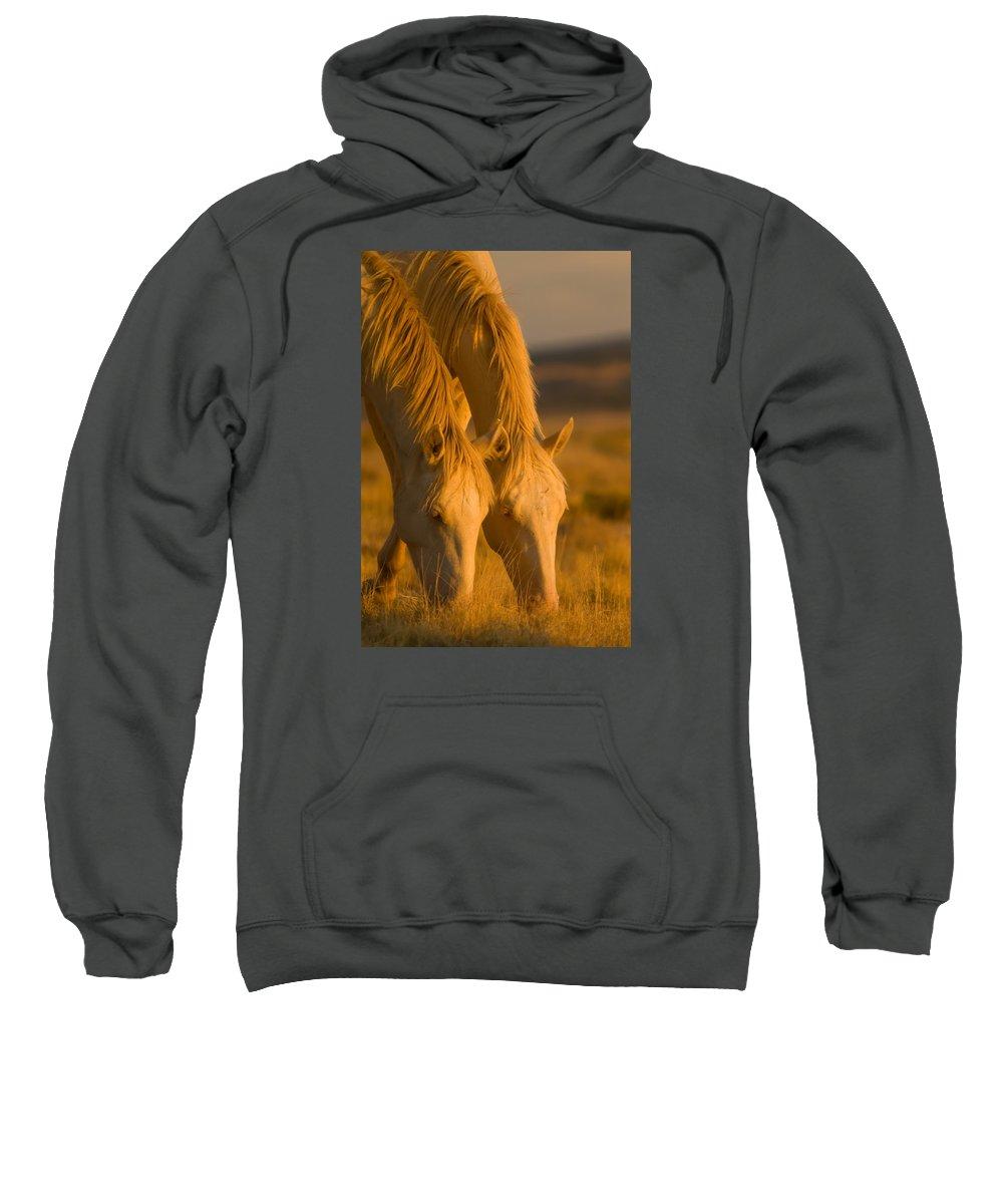 Wild Horse Sweatshirt featuring the photograph Cremello Sunset by Kent Keller