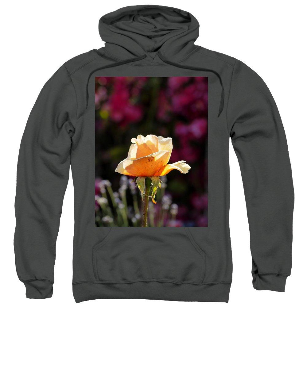 Botanical Sweatshirt featuring the photograph Crimson Gold Lavender by Richard Thomas