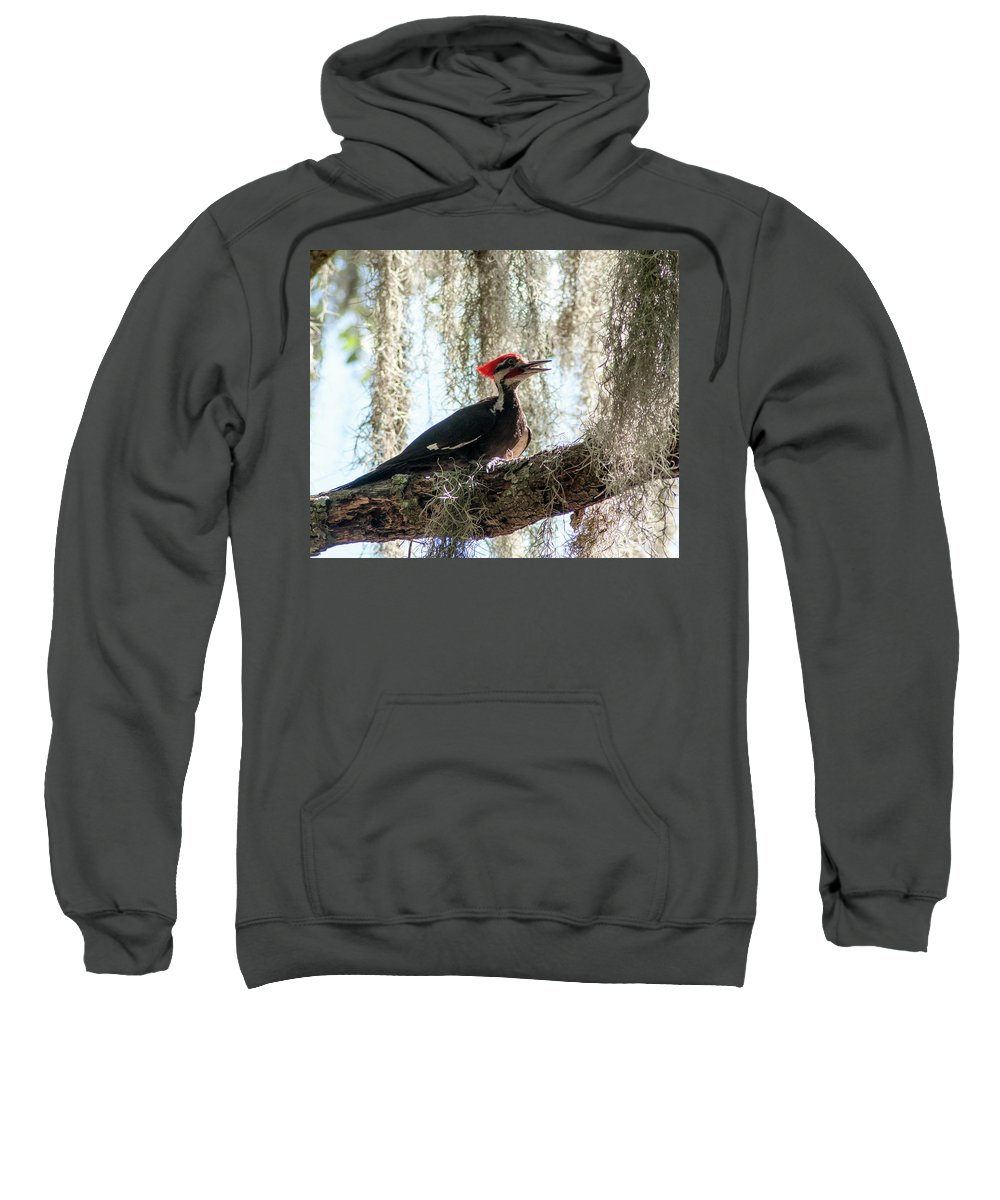 Pileated Woodpecker Sweatshirt featuring the photograph Crimson Highlights by Norman Johnson