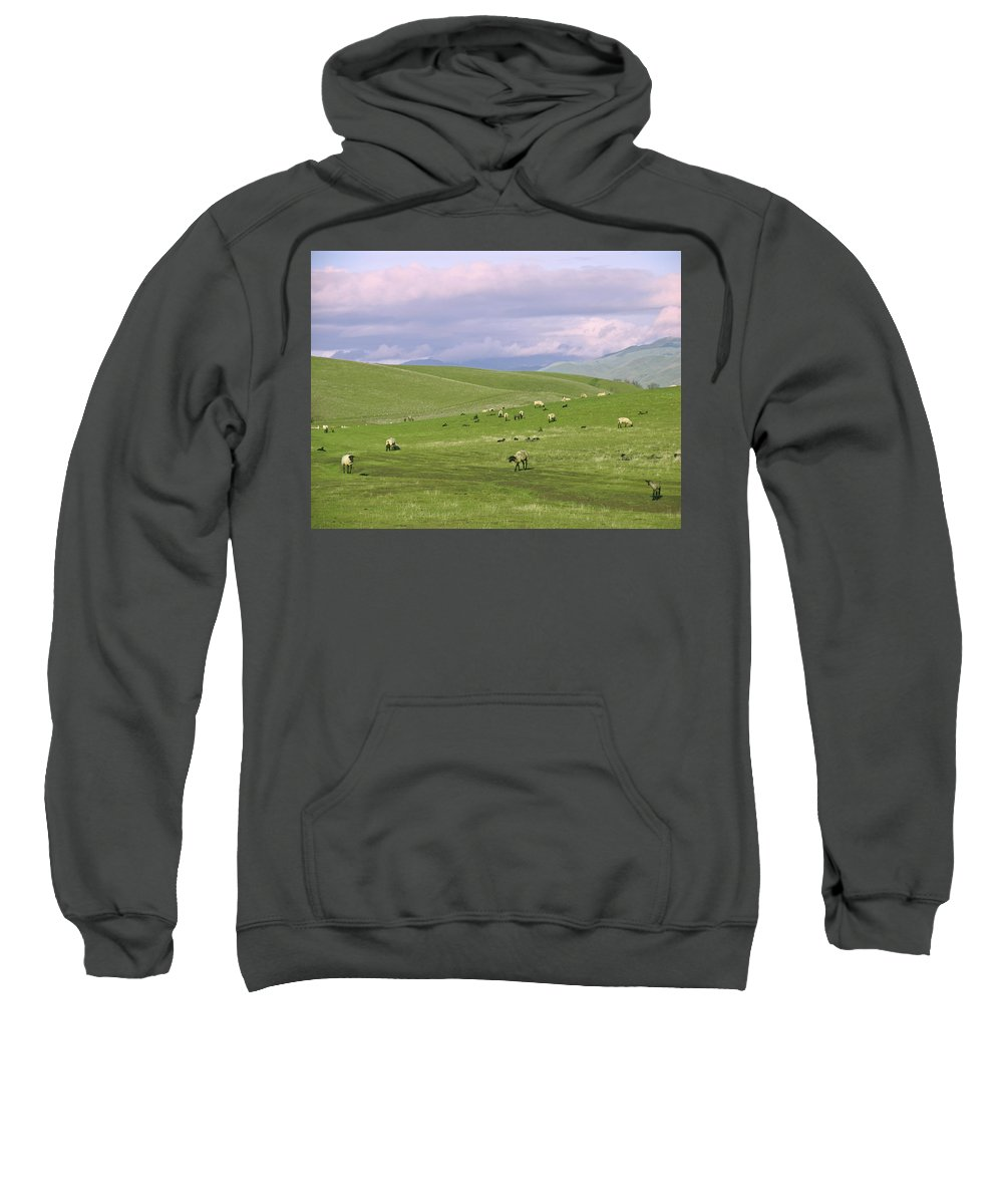 Landscape Sweatshirt featuring the photograph Cross Road Sheep by Karen W Meyer
