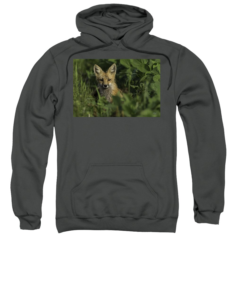 Red Fox Sweatshirt featuring the photograph Curiosity by Everet Regal