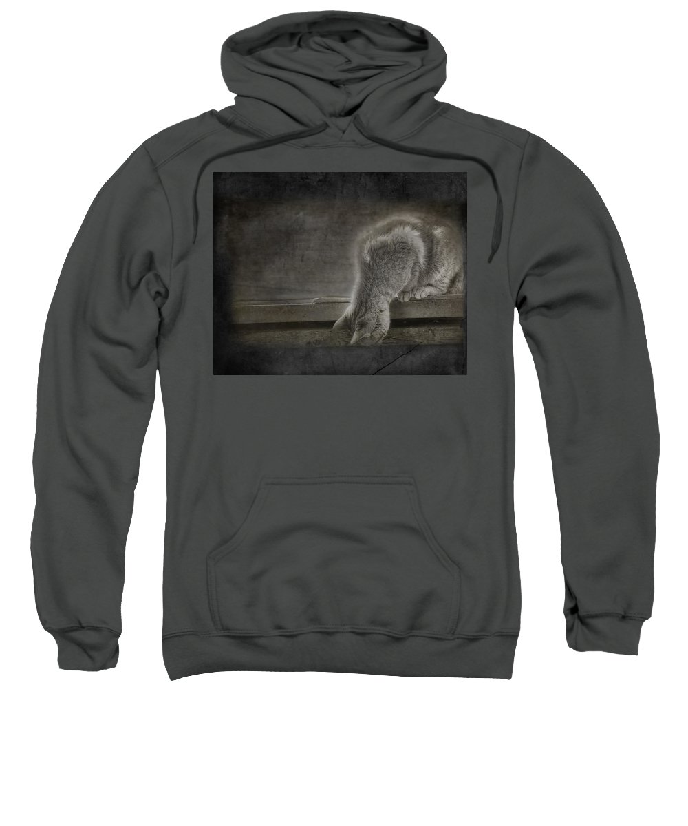 Cat Sweatshirt featuring the photograph Curiosity by Susan Capuano