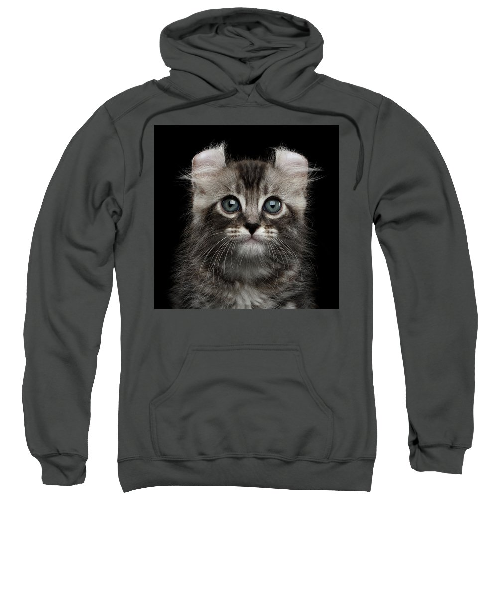 Curl Sweatshirt featuring the photograph Cute American Curl Kitten With Twisted Ears Isolated Black Background by Sergey Taran