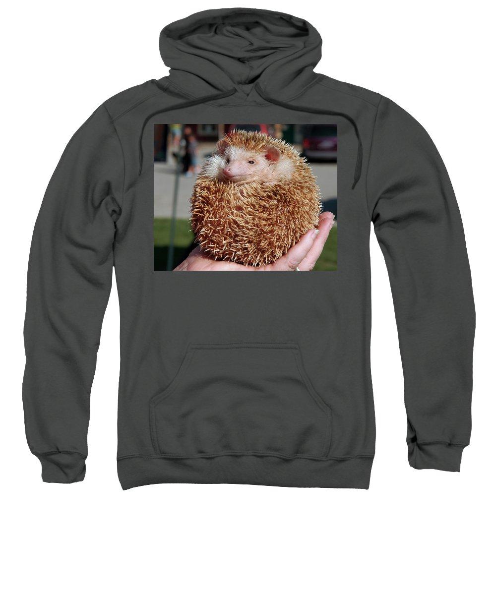 Usa Sweatshirt featuring the photograph Cute Little Hedge Ball by LeeAnn McLaneGoetz McLaneGoetzStudioLLCcom