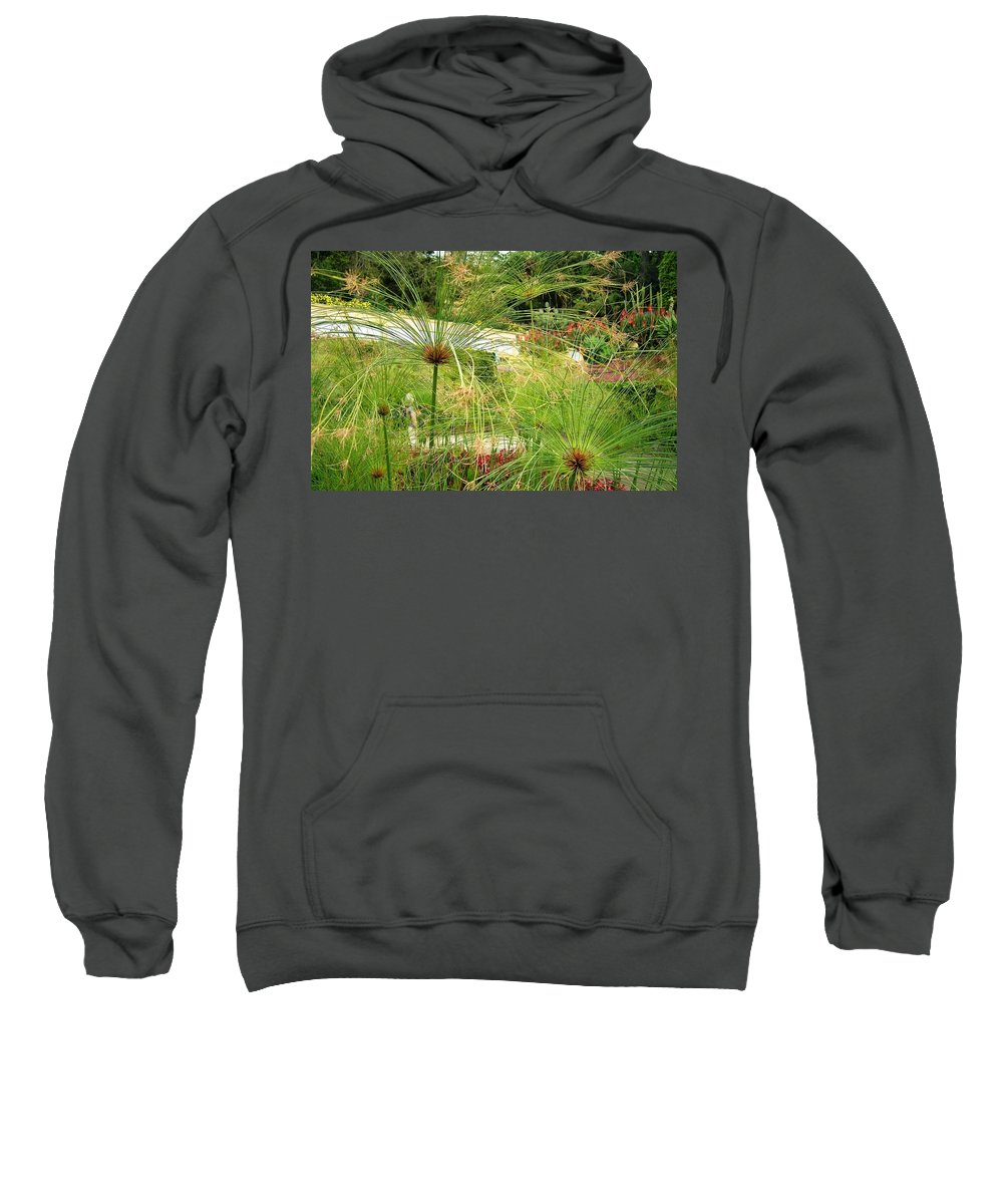 Landscape Sweatshirt featuring the photograph Cyperus Papyrus - Bulrush by Valerie Ornstein