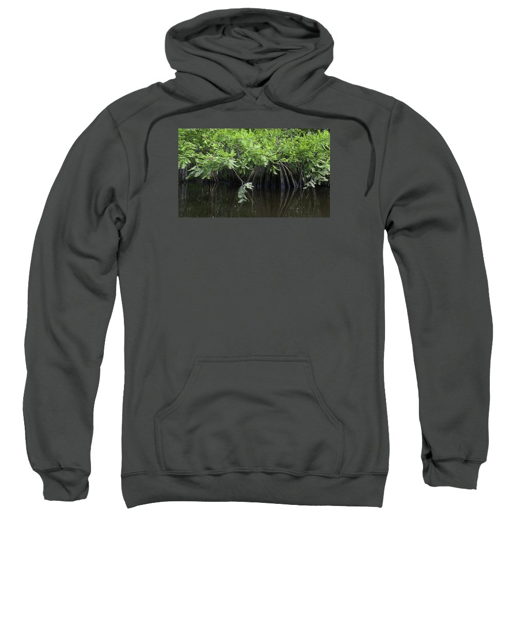 Louisiana Wetlands Sweatshirt featuring the photograph Cypress Leaves And Fluted Trunks by Richard Waller