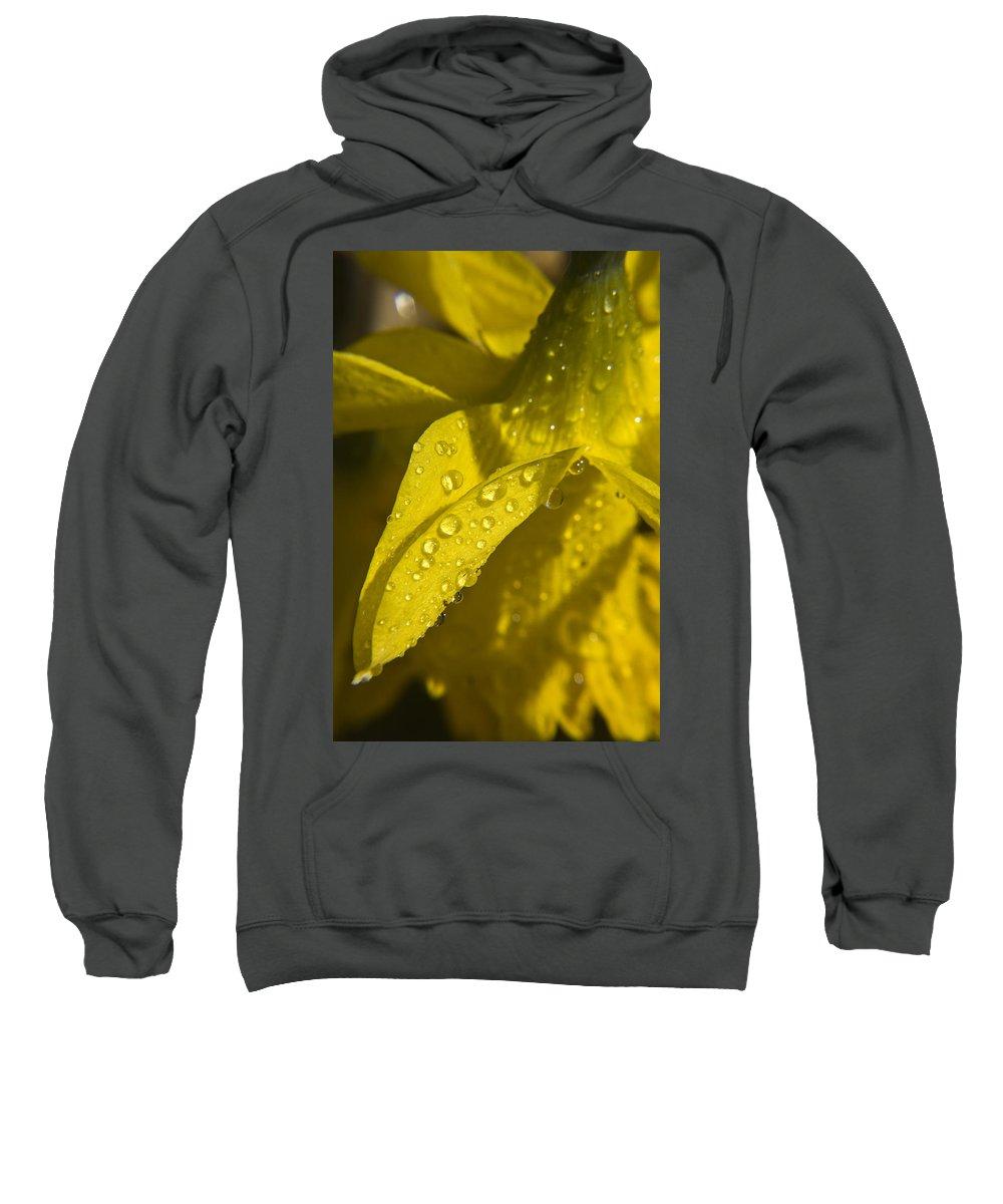 Daffodil Sweatshirt featuring the photograph Daffodil Dew by Teresa Mucha