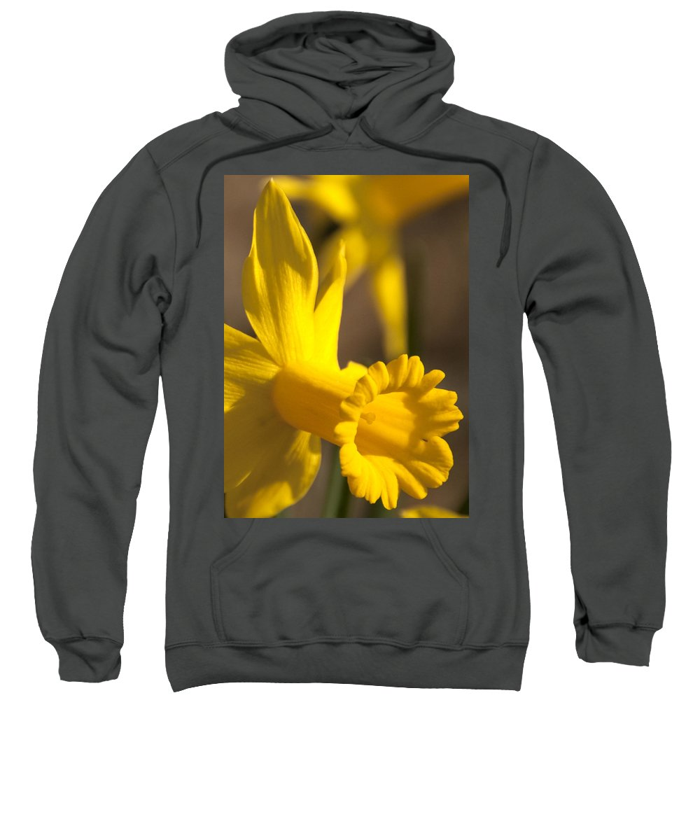 Daffodil Sweatshirt featuring the photograph Daffodil Yellow by Steven Natanson