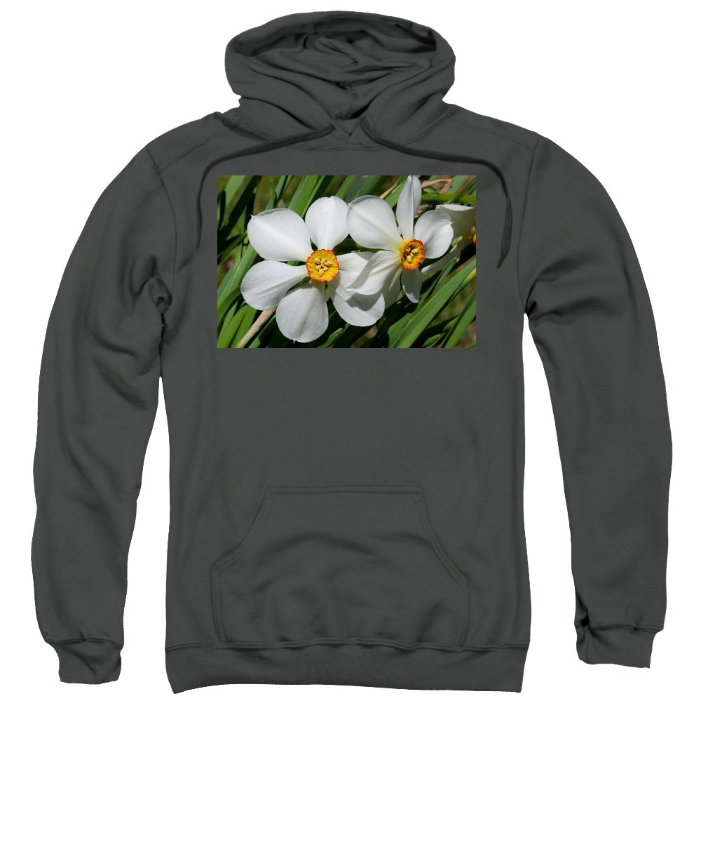 Daffodil Sweatshirt featuring the photograph Daffodils by David Freuthal