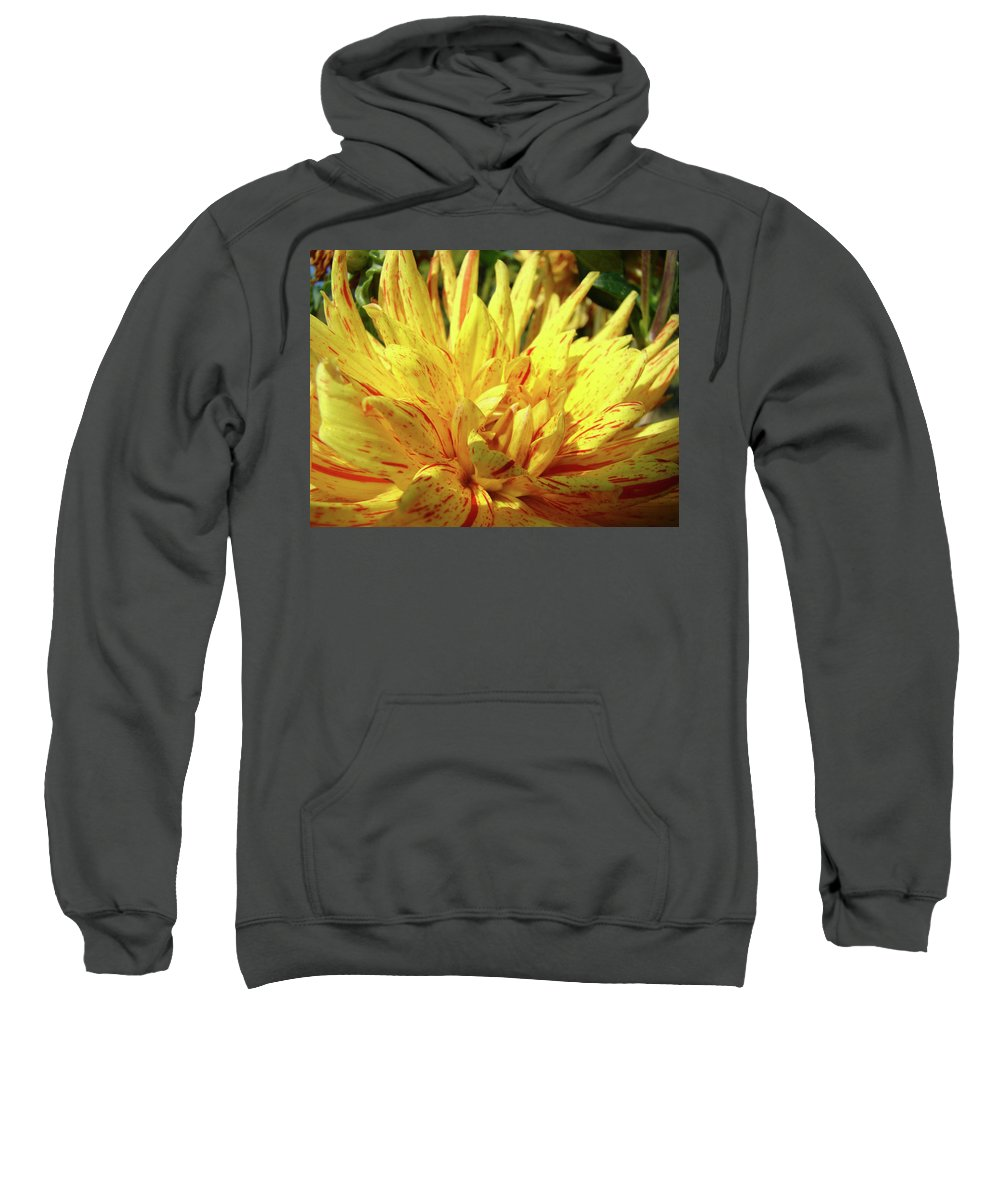 Dahlia Sweatshirt featuring the photograph Dahlia Flower Art Collection Giclee Prints Baslee Troutman by Baslee Troutman