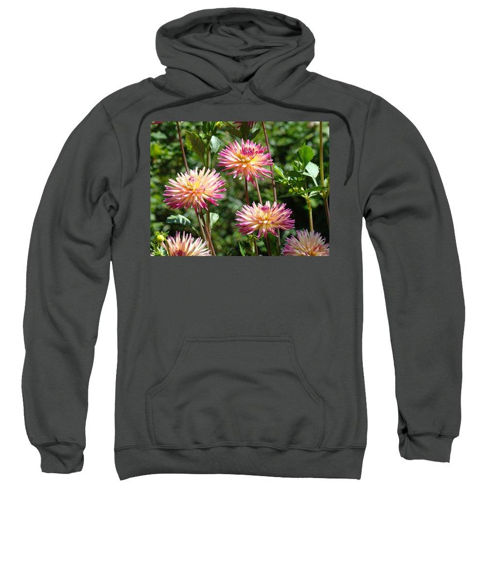 Dahlia Sweatshirt featuring the photograph Dahlia Garden Floral Pink Yellow Botanical Landscape Baslee Troutman by Baslee Troutman
