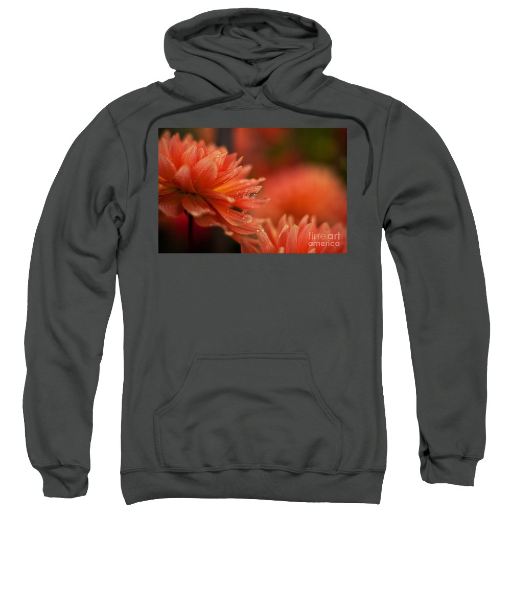 Dahlia Sweatshirt featuring the photograph Dahlia Rainshower by Mike Reid