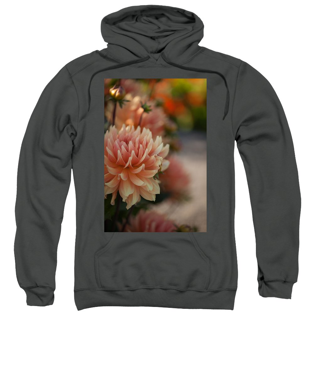 Flower Sweatshirt featuring the photograph Dahlias Season by Mike Reid