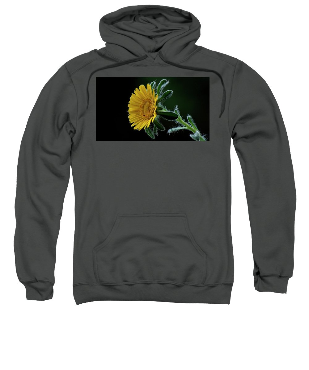 Flower Sweatshirt featuring the photograph Daisy by Suzanne Morshead