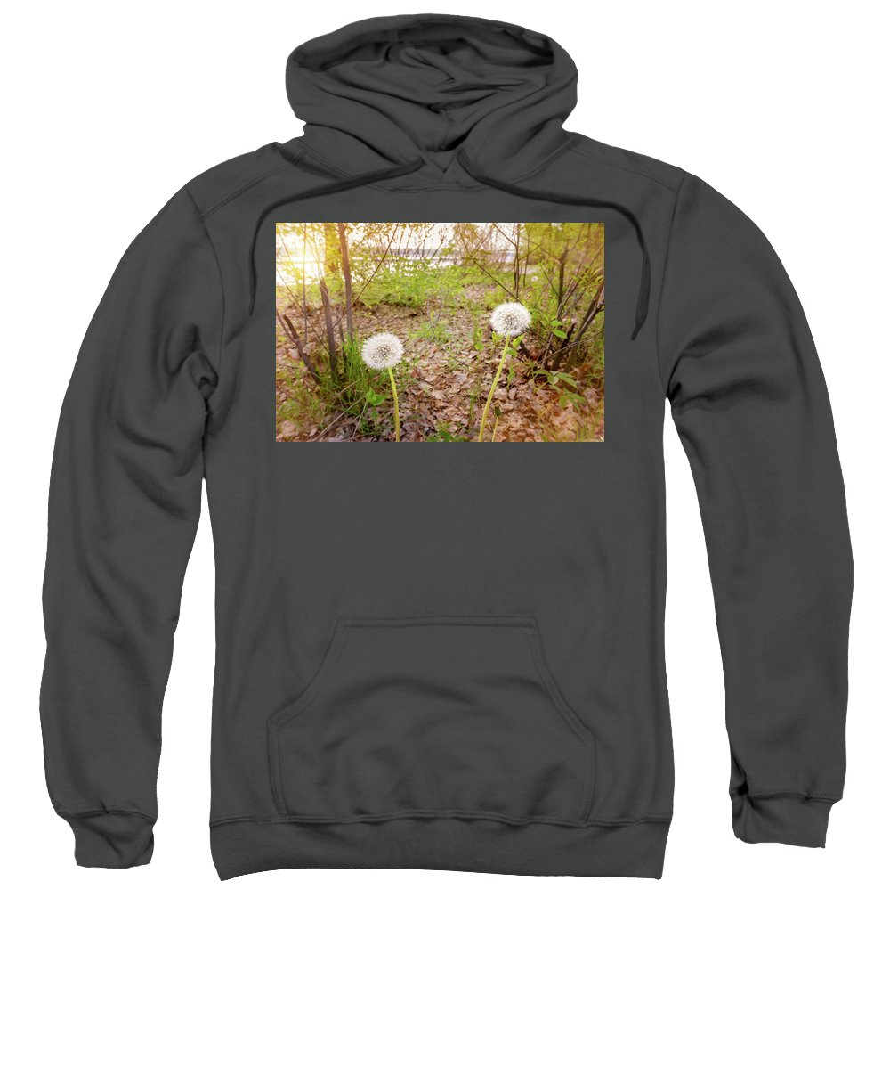 Backlit Sweatshirt featuring the photograph Dandelion Close To The River by Alain De Maximy