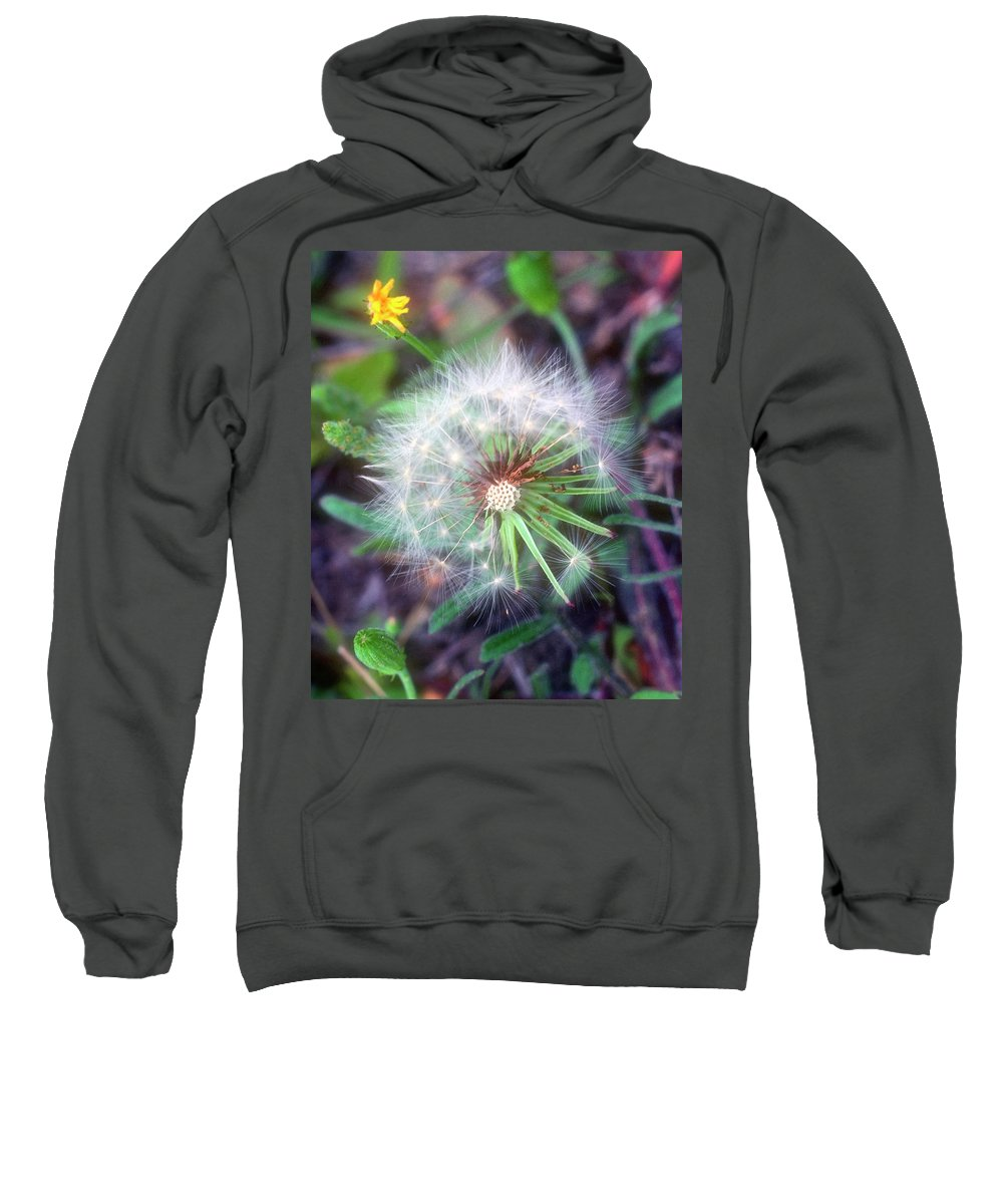 Flower Sweatshirt featuring the photograph Dandelion by Stephen Anderson