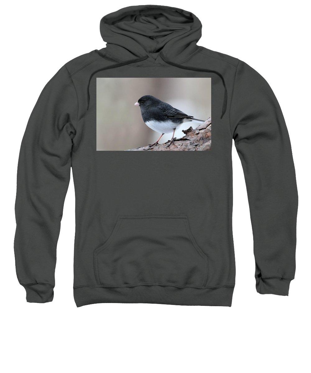 Dark-eyed Junco Sweatshirt featuring the photograph Dark-eyed Junco by Diane Giurco
