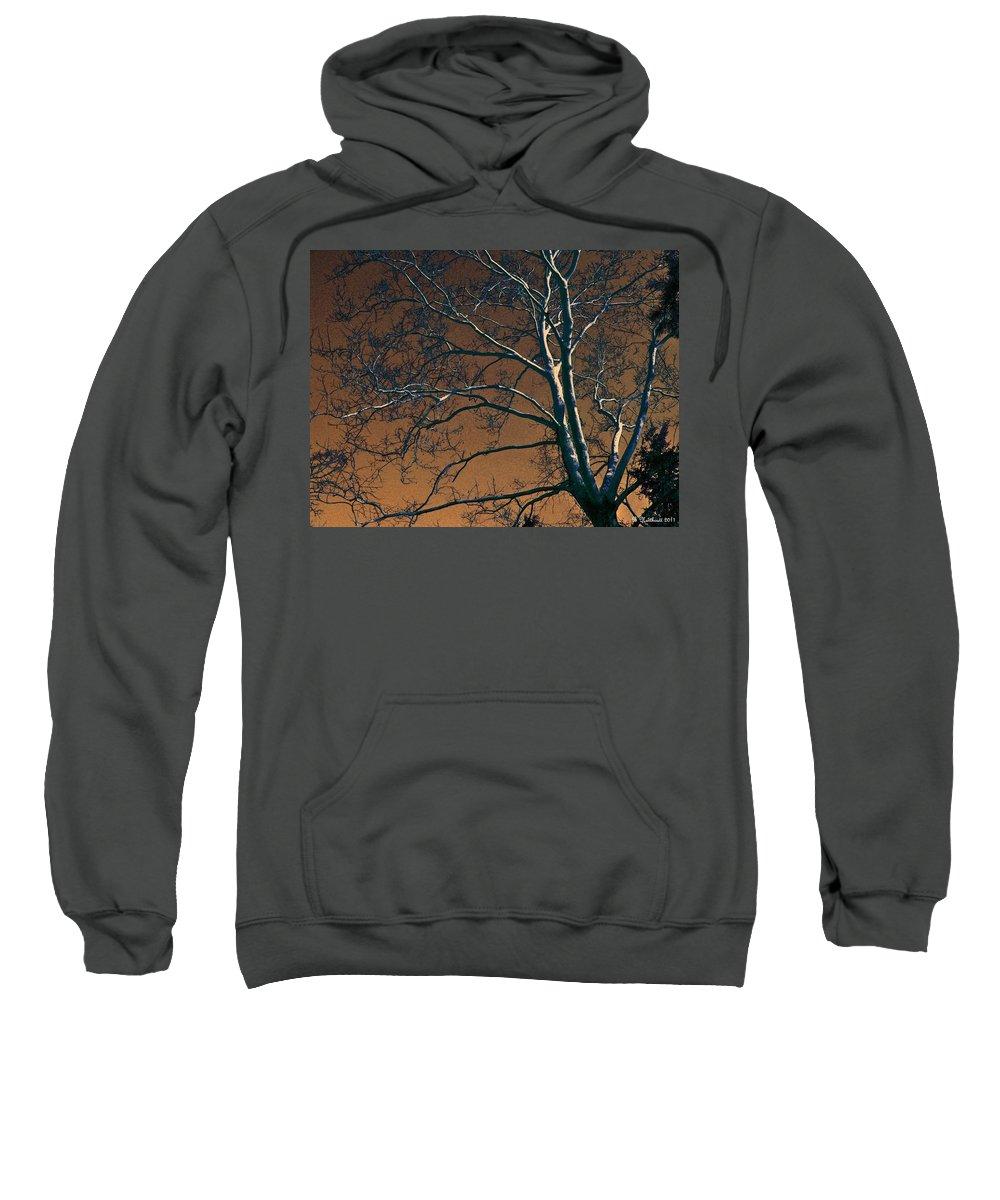Tree Sweatshirt featuring the photograph Dark Woods II by Betty Northcutt