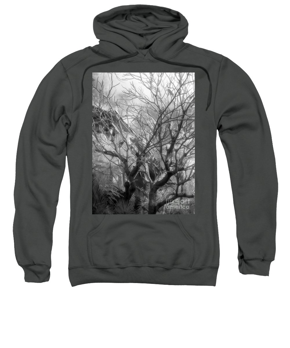 Infrared Photography Sweatshirt featuring the photograph Day Dream by Richard Rizzo