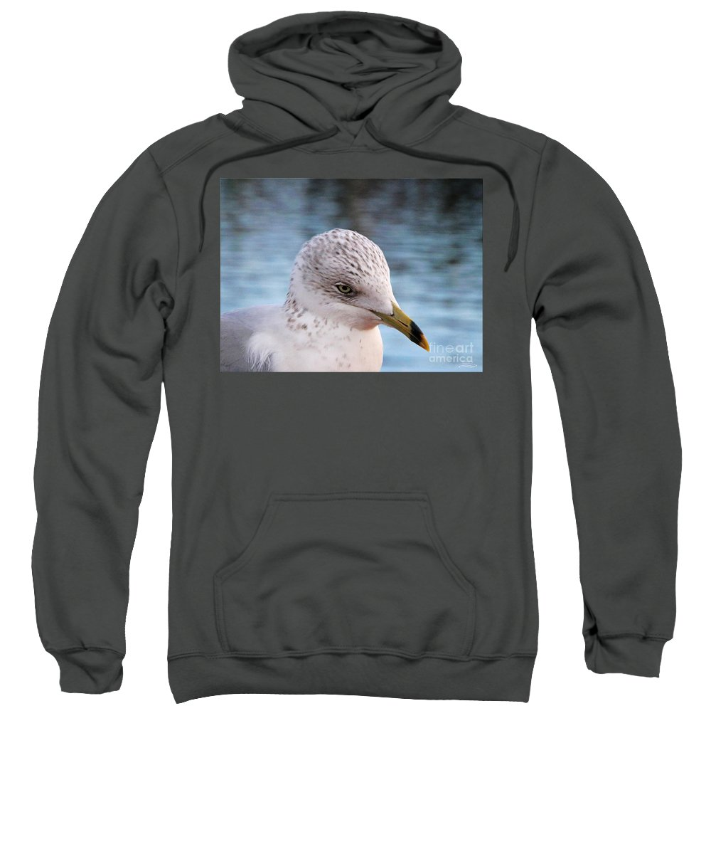 Sea Gull Sweatshirt featuring the photograph Day Dreaming by Rebecca Morgan