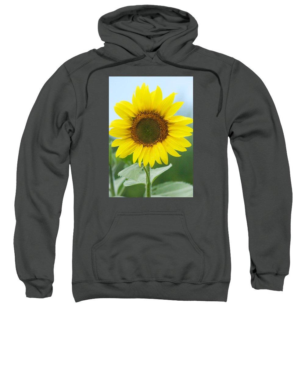 Flower Sweatshirt featuring the photograph Dazzling Sunflower by Tiffany Erdman