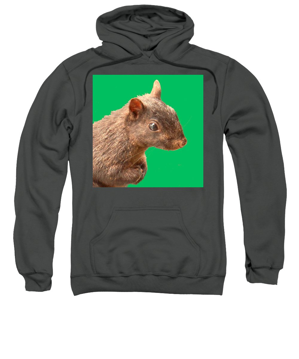 Squirrel Sweatshirt featuring the photograph Definately Bright Eyed by Ian MacDonald