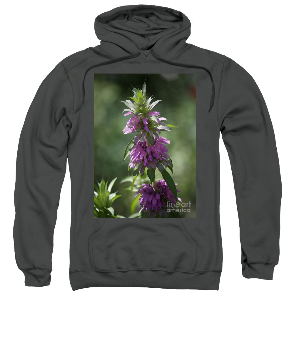 Desert Sweatshirt featuring the photograph Delicate Desert Flower by Carol Groenen