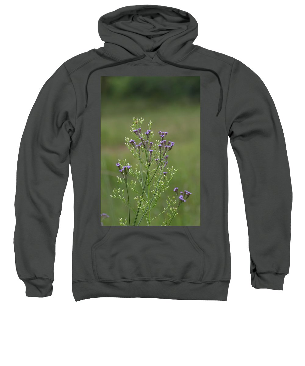 Verbena Sweatshirt featuring the photograph Delicate Lavender Verbena Wildflowers by Kathy Clark