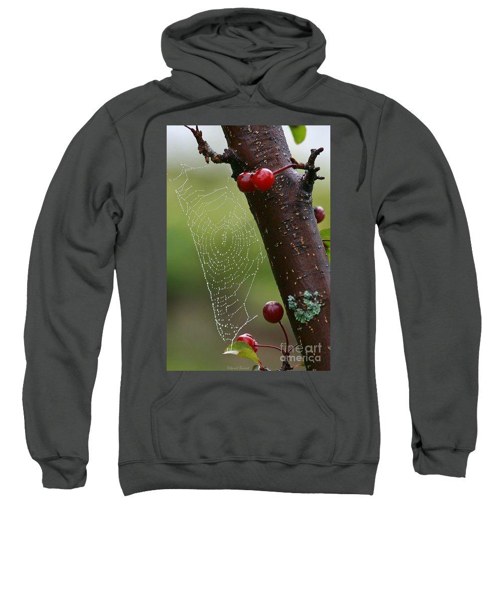 Tree Sweatshirt featuring the photograph Delicate Spider Weave by Deborah Benoit