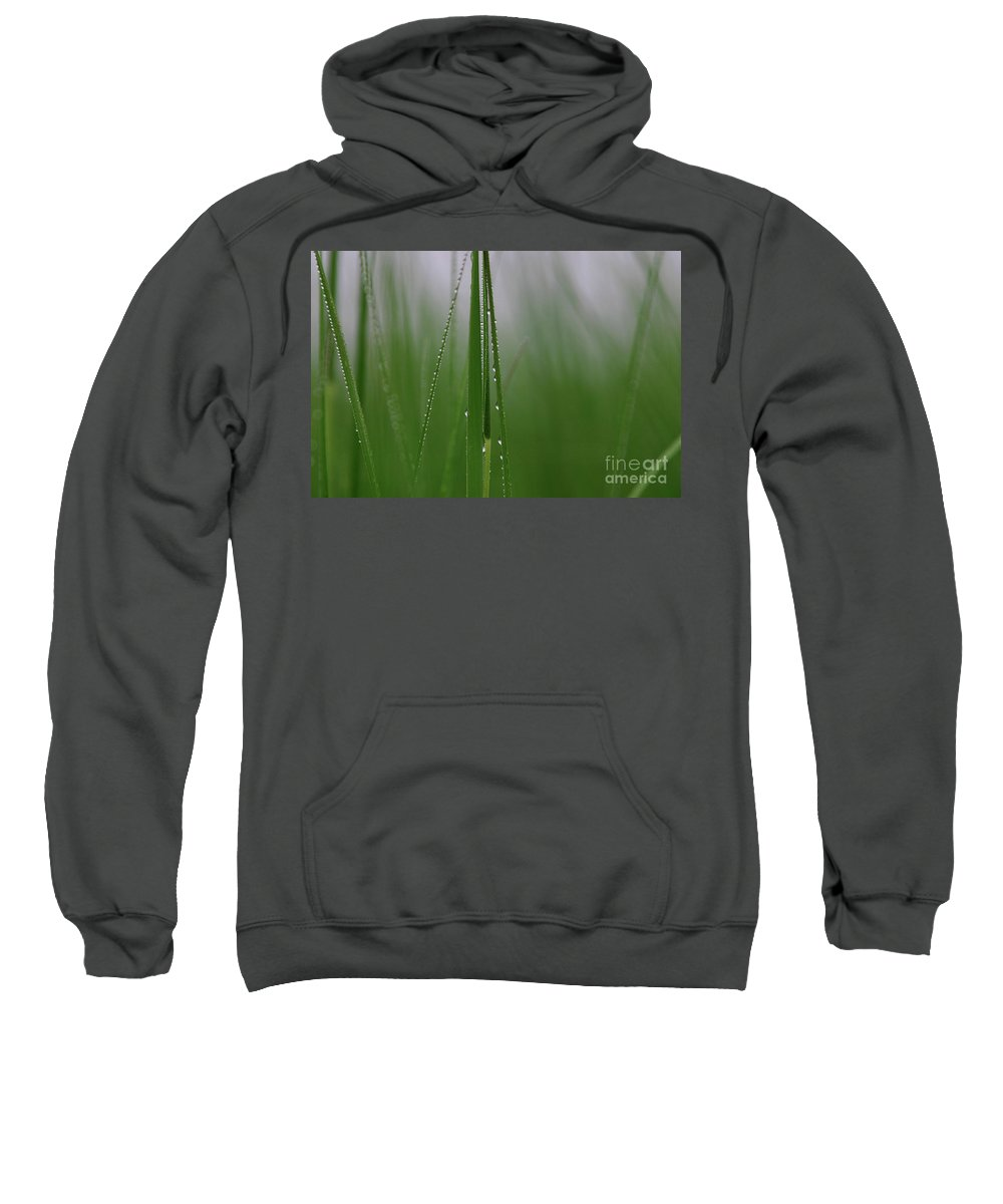 Grass Sweatshirt featuring the photograph Dew Drops by Karol Livote