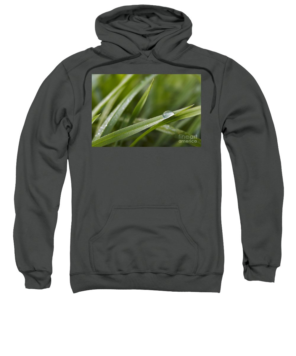 Grass Sweatshirt featuring the photograph Dewy Drop On The Grass by Michal Boubin