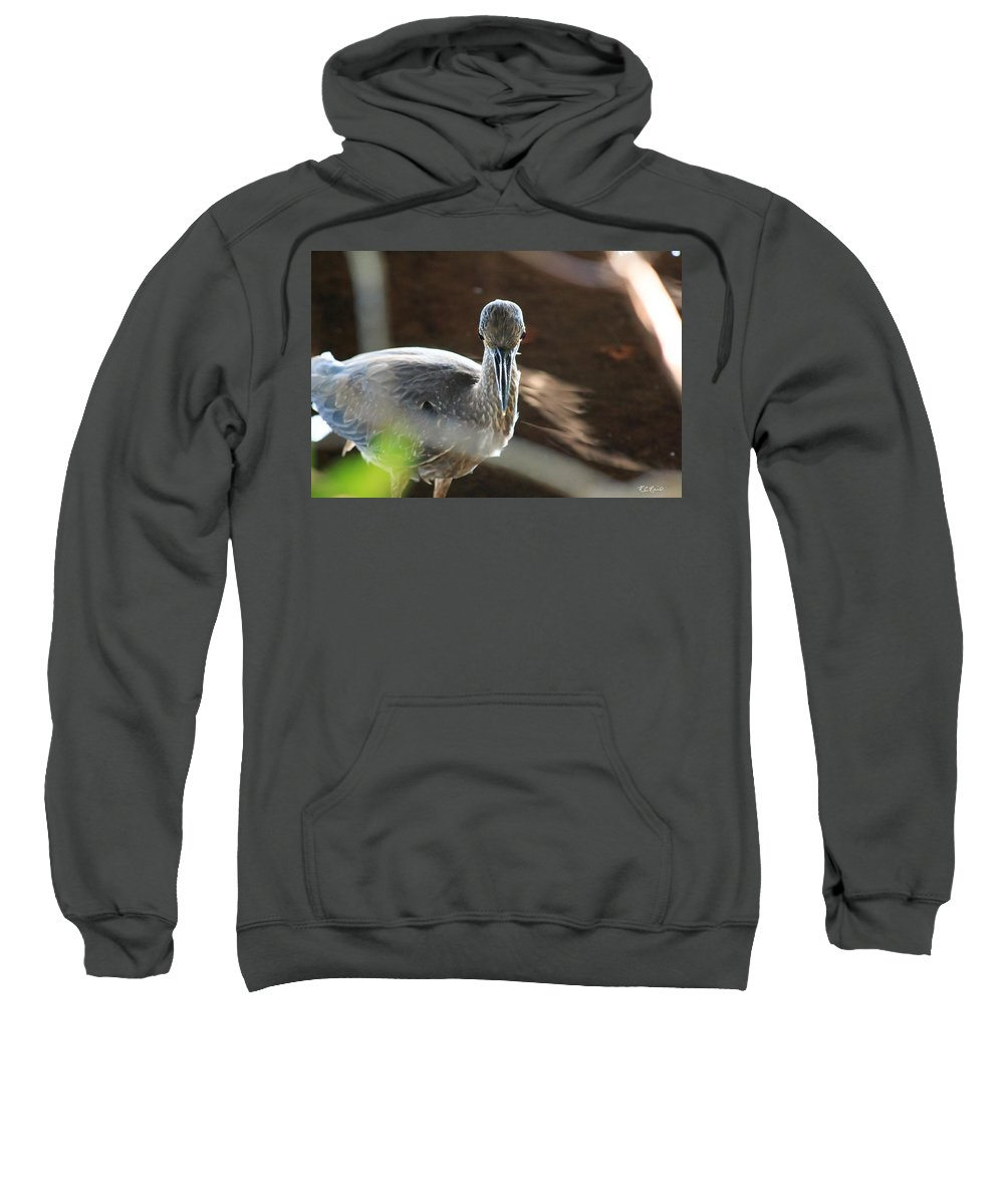 Florida Sweatshirt featuring the photograph Ding Darling - Juvenile Black-crowned Night Heron Looking At You by Ronald Reid